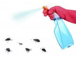 A plastic spray bottle and some bugs